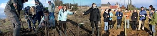 babel_treeplanting