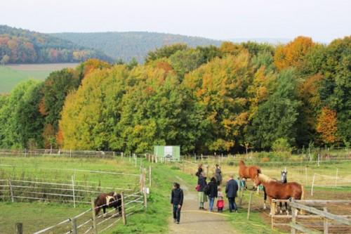 horses-at-HH